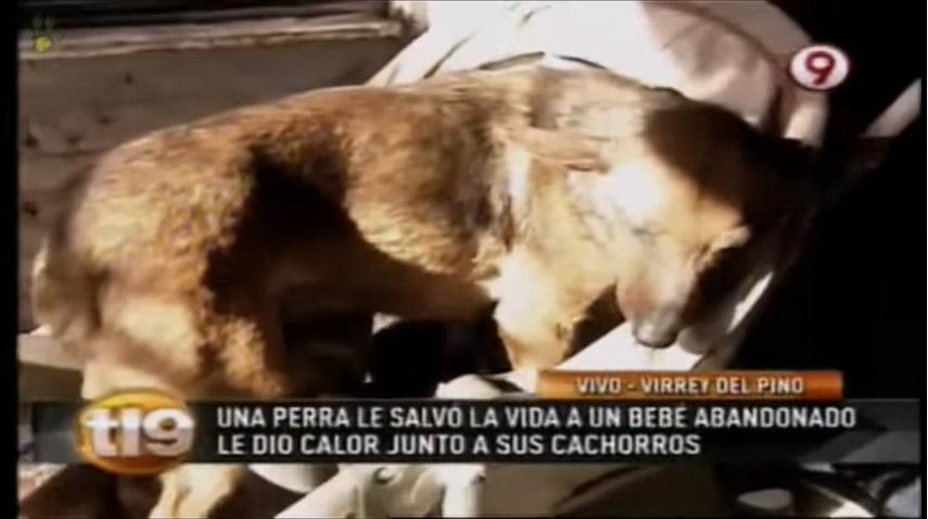 流浪狗在街上看見「1個月大被拋棄嬰兒」快凍死,跨種族母愛爆發「緊急急救」救小嬰兒一命!