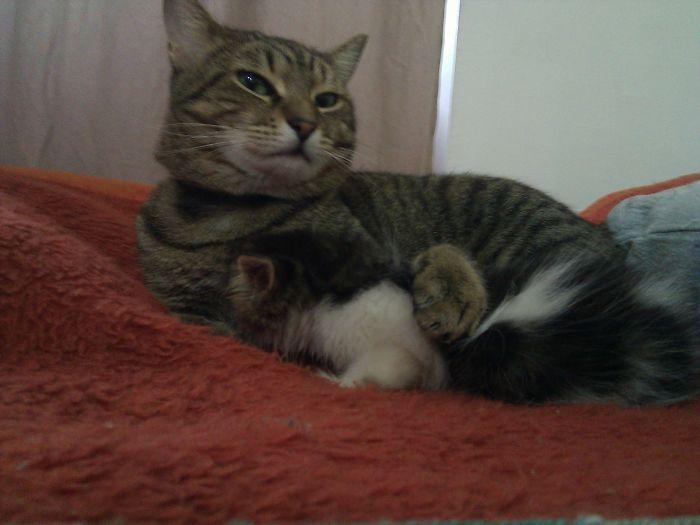 1個月小貓被撿回家後一直非常害怕,2歲貓咪「成為爸爸」用心照顧後「他用超感動萌萌方式報答」!