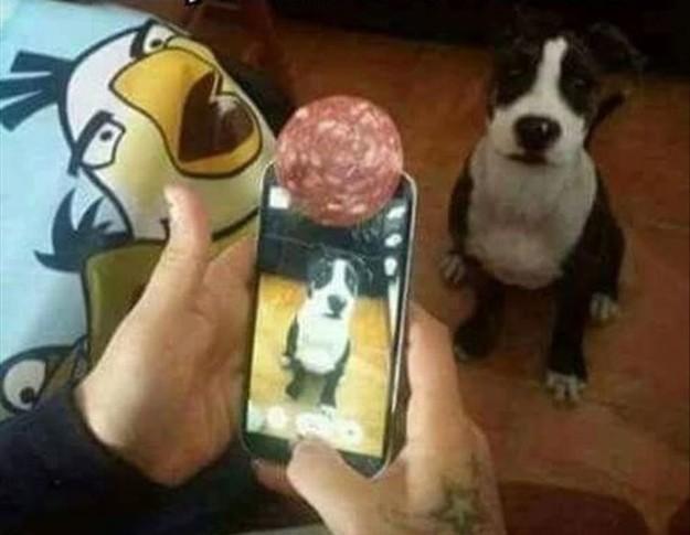 18個「人類智慧發揮到極致」的絕妙點子。#1讓狗狗拍照時永遠看著鏡頭!