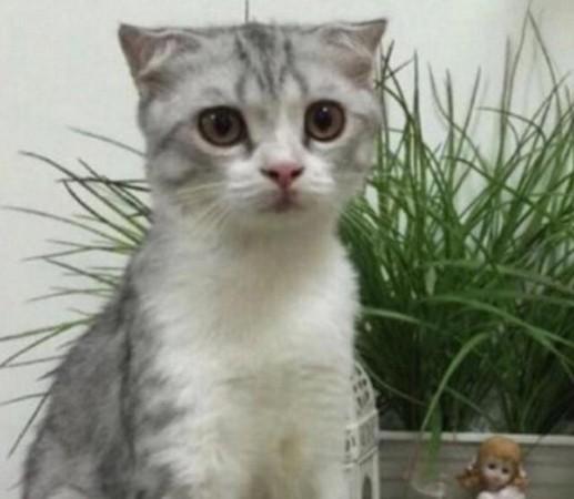 出差時貓咪拜託朋友「照顧」,回來「認不得」!網友笑:「被掉包了...」
