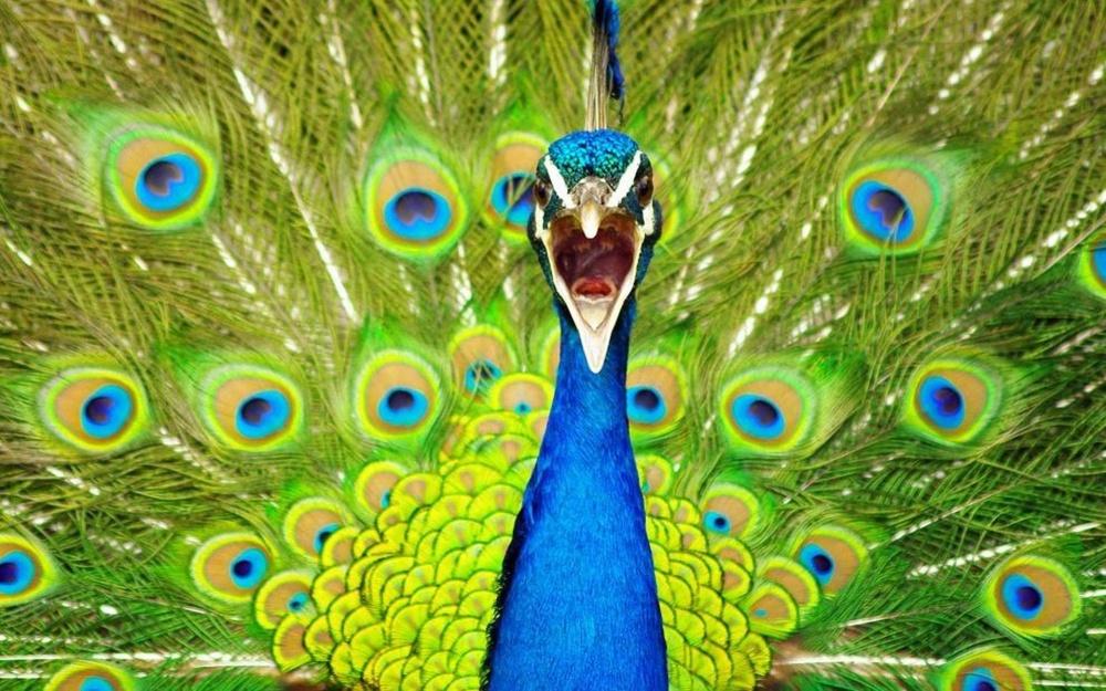 30張會讓你不敢相信這沒有被P圖過的「大自然驚奇」照片!