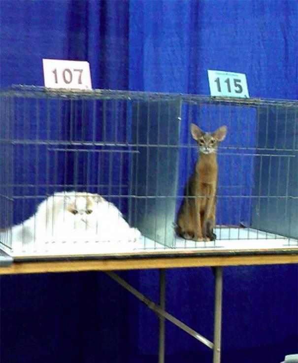 34張「讓鋼鐵人也一秒融化」的動物超萌睡姿 貓咪的極限到底在哪?