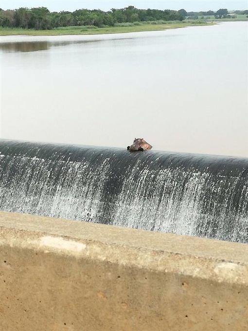 與「嚕嚕米」相似度90%的河馬「撲砂壩發呆照」腳腳盪出來,第3張看到鏡頭可愛到爆!(3張)