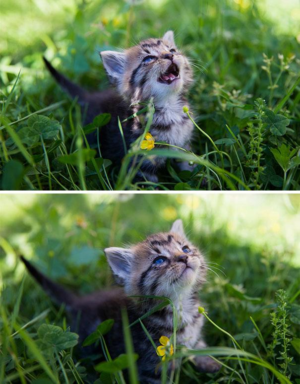 30幾張讓你下輩子考慮不再當人的「最可愛動物的第一次瞬間」!