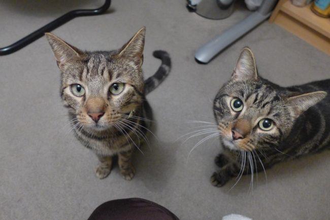 愛貓被車撞死後主人心碎不已,直到收到「神秘客紙條」才發現貓咪生前「另一個溫馨機密身分」!