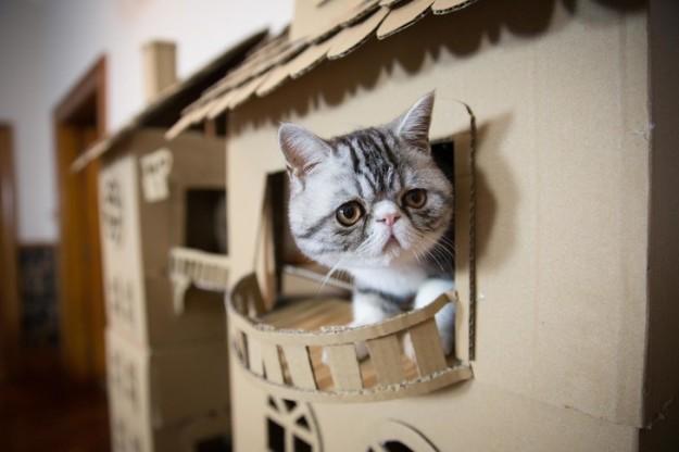 正妹貓奴為了取悅貓王子「花幾天製作最華麗的貓皇宮」,結果「他玩了10分鐘」悲劇就發生了...