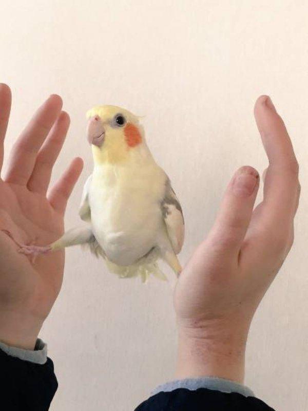 36隻會讓你今天充滿動力的「超給力可愛小動物」。