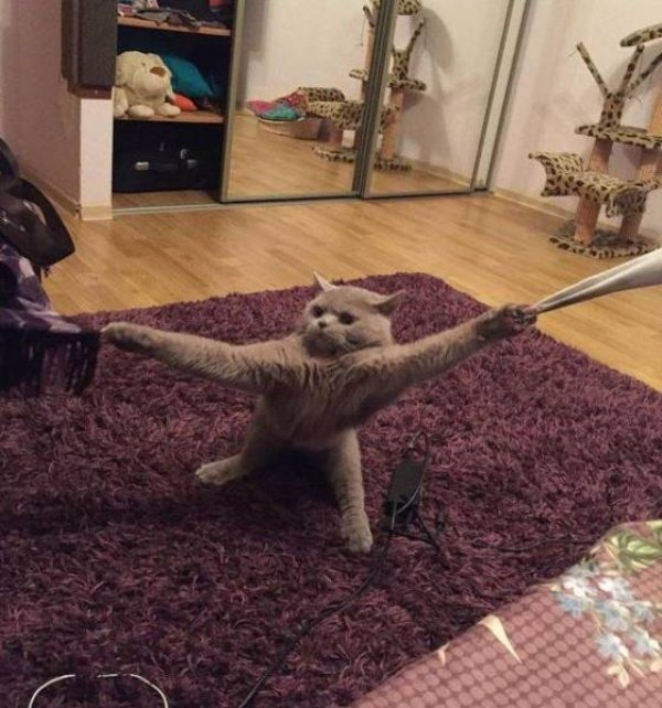daily picdump 2461 640 52 Animals are the engine that power the internet (36 Photos)