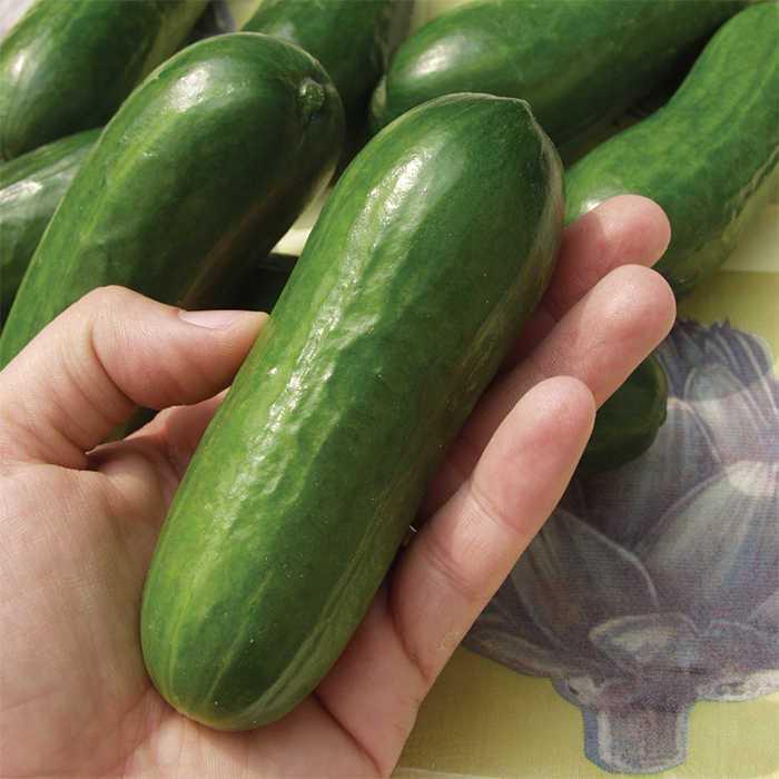 51歲女子「小黃瓜卡在陰道裡」痛到求醫,堅稱:「跌倒時剛好被小黃瓜插入!」