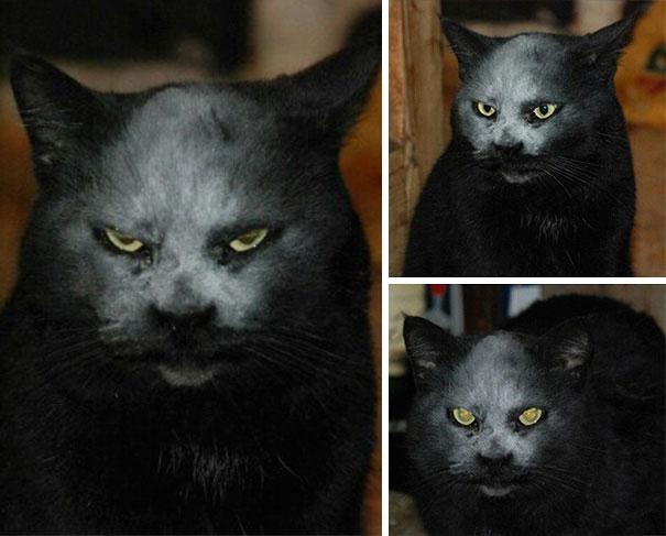 25張證明「貓咪其實都是魔鬼」的恐怖真相圖!#2你家貓咪這樣的話快逃!