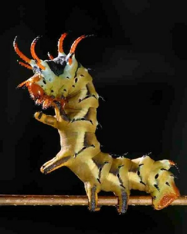 2030720 213 Nope: the nopiest insects on planet nope (27 photos)