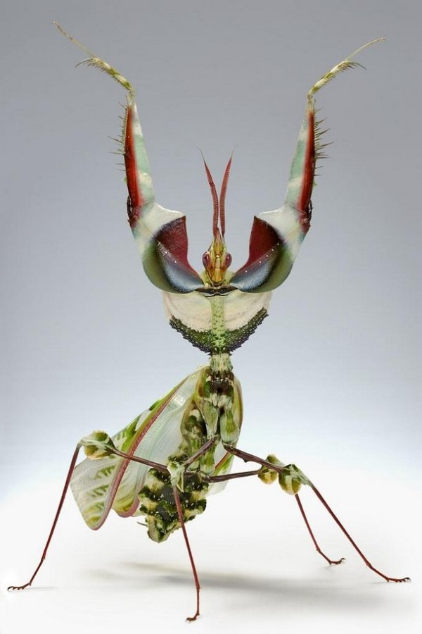 2030720 214 Nope: the nopiest insects on planet nope (27 photos)