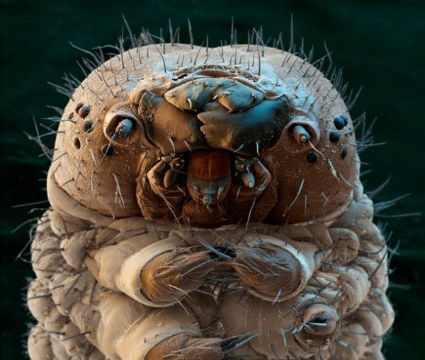 2030720 217 Nope: the nopiest insects on planet nope (27 photos)