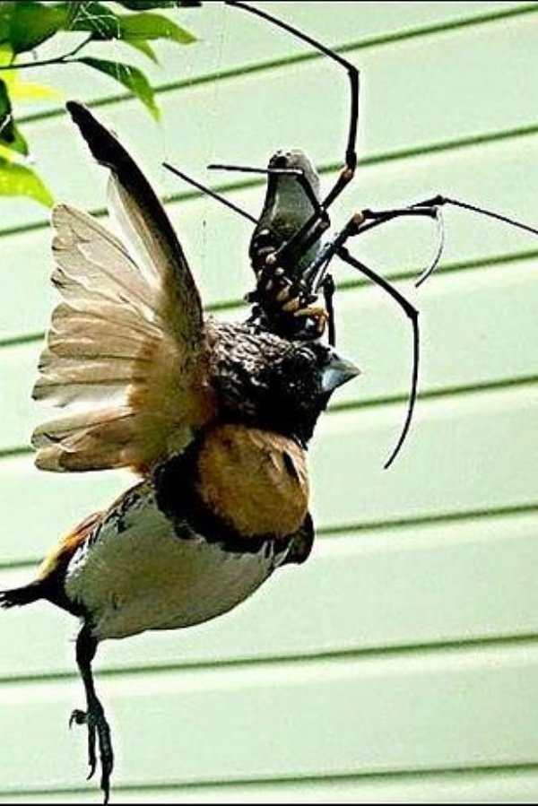 2030720 225 Nope: the nopiest insects on planet nope (27 photos)
