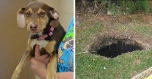 散步時害羞狗狗突然「瘋狂大叫」,衝到洞前發現「躺著的裸體小女孩」!
