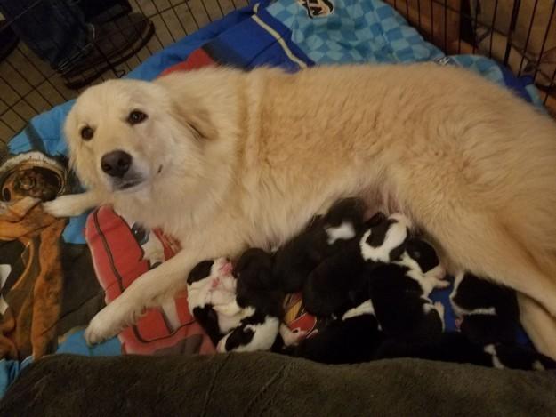 狗媽媽在「狗寶葬身大火」後每天哭泣,領養8隻孤兒她臉上終於露出笑容了!(7張)