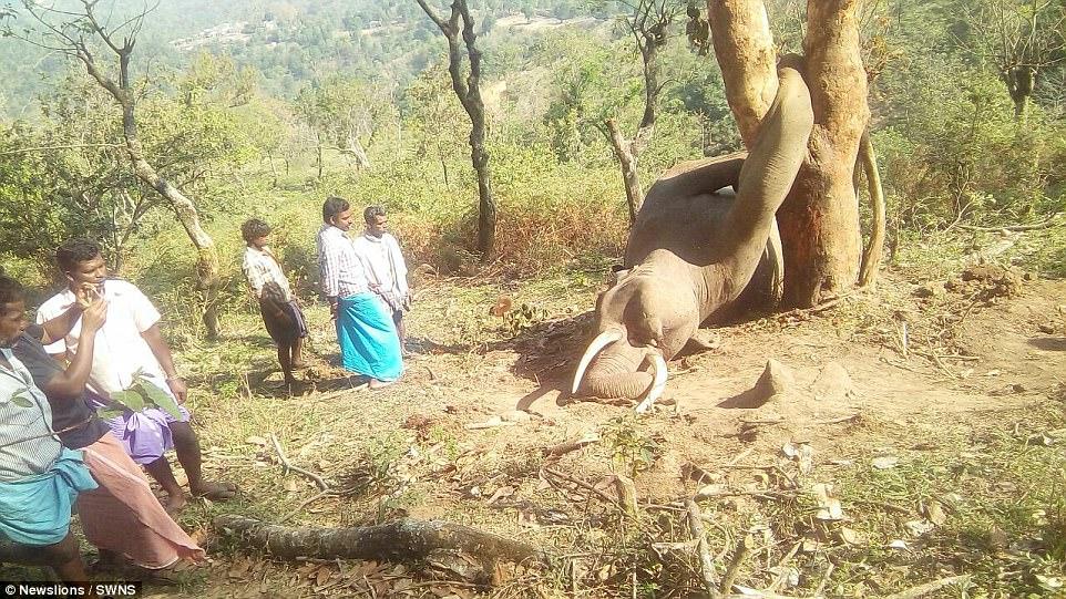 他們在叢林驚見死去大象,「沒看過死狀這麼慘的!」