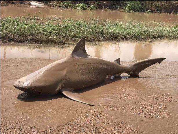 最強怪獸風暴來襲!大鯊魚被捲上岸慘遭「泥漿封印」!(影片)