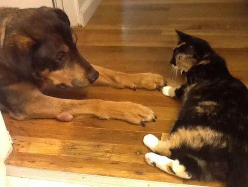 狗狗癌症離世貓咪「傷心到沒有食慾」,主人放影片後貓咪「以為狗狗回來動作」讓你淚崩...