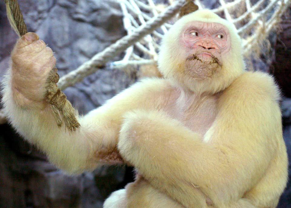 14張「可愛到把你心融化」的唐氏症動物萌照,#9白猩猩超特別!