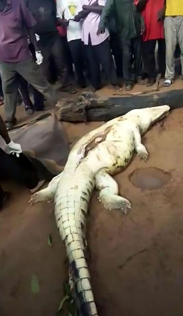村民將「大鱷魚」殺死後,肚子切開「8歲小孩的遺體」一塊一塊拿出來家人崩潰了...(影片)