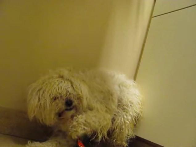 小狗被人打到人一靠近他就尖叫!安樂死前1:30發現「沒事了」反應讓人噴淚!