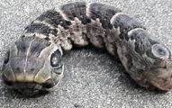 女子散步時在院子發現「雙頭蛇」差點被嚇壞!網友:「這不是蛇...」