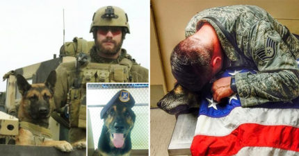 軍犬和主人5年來出任務從沒分開過,6年後「抱著他吐出最後一口氣」最後笑容讓網友淚崩!(13張)