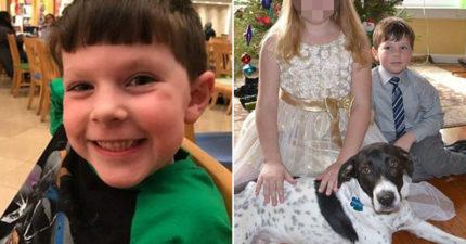 5歲男童慘遭自家狗狗「勒死」急救宣告不治,醫生:「不能怪狗狗。」(非趣味)