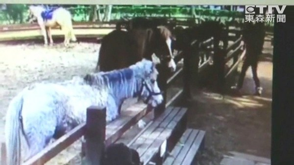 愛子「餵馬遭咬斷指」母痛批埔心,監視器畫面曝光後質疑「為何沒人制止?」