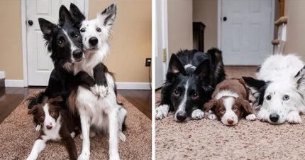 兩隻網紅「抱抱狗」家裡多領養一隻超萌小成員!新成員入境隨俗也學會了「抱抱」!(8張)