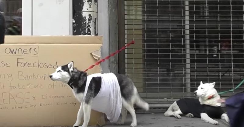 狗狗在寒冷的冬天被「拋棄街頭」超殘酷社會實驗,2:40還有人「吐口水」唯一幫助的人令人想哭! (影片)