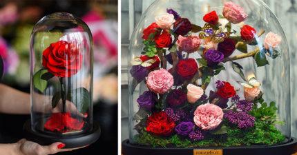 30款《美女與野獸》3年不凋零的「永恆玫瑰」,撐過期限跟另一半就可以長長久久!(有點貴)