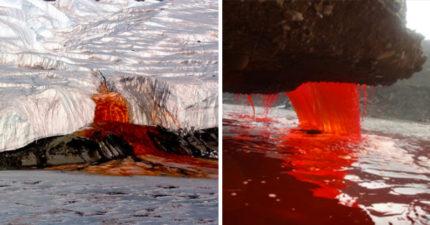 過了100年,科學家終於找到南極冰山「血瀑布」中的真相!網友:「我寧願相信是大地之母的月經...」