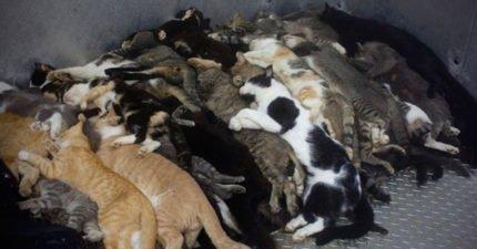 台灣成為亞洲第一個禁吃貓狗的國家「國外媒體大讚」!「用車溜狗」也違法!