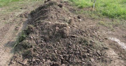 路邊土堆傳來嗚嗚聲,一挖開竟發現「人類最殘忍證據」!