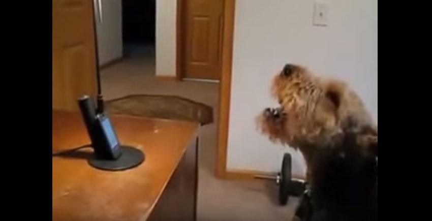 狗狗好久沒見到媽媽「用電話跟媽媽通話」,「超越狗狗極限」對話讓人吃驚!