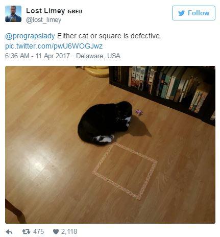 網友發現最強大捉弄貓咪最新方法 「天生有抗體」的貓咪畫面超爆笑!