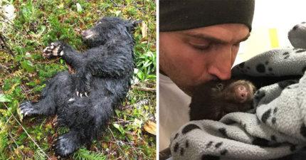 登山客冒生命危險「拯救奄奄一息小熊」口對口搶救,當地法律要他們見死不救「不然坐牢」!