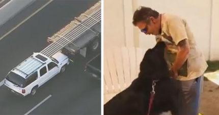 《絕命終結站》上演!男子出車禍金屬棒全插進去!沒想到是狗狗救了他!
