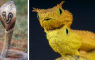 13種隱藏在美麗軀體下的超危險「最致命的恐怖毒蛇」