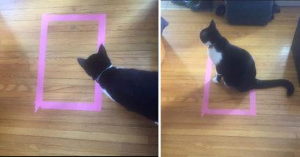 網友發現最強大捉弄貓咪最新方法!「有抗體」貓咪畫面超爆笑!(16張)