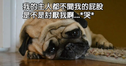 21個用狗狗的邏輯講出來的超爆笑心聲,會讓你發現你真的不了解你的狗兒!