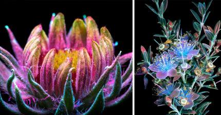 30張攝影師偷偷拍到「植物都會發電」的驚人阿凡達等級絕美花朵照!
