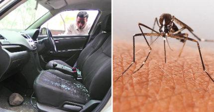 小偷偷車以為不會被發現,警方一隻蚊子把他逮個正著!