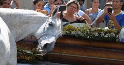 在葬禮上馬聞了主人的棺材後,下一個動作讓全場心碎!