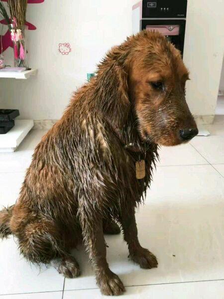 愛犬「玩到全身泥回來」氣得正要罵,鄰居說出「救命真相」讓他超慚愧!