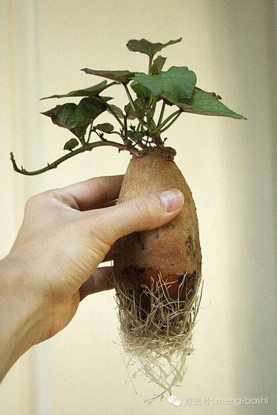 別再浪費錢了!9個「種一次可以吃一輩子」的營養再生蔬果。#2超好種菜鳥必備!