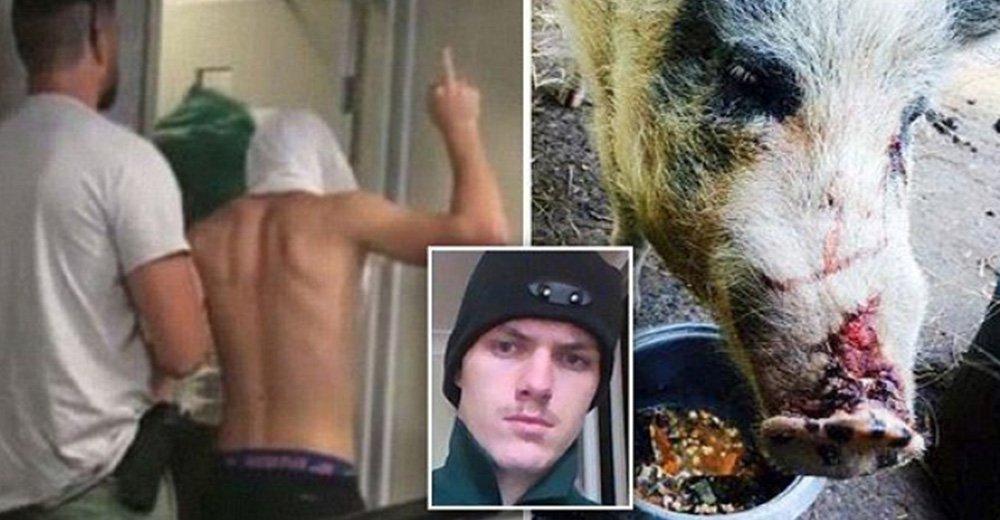 2名男子發瘋虐殺農場的母雞,看到一旁的無辜「母豬」直接輪姦!法官重判!