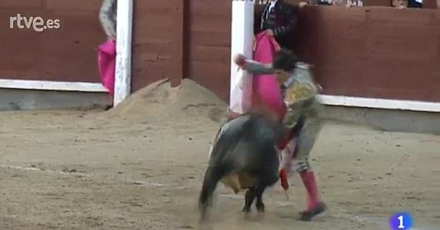 23歲鬥牛士首次上場「舌頭、喉嚨、嘴」被牛慘刺穿!把他當娃娃一樣摧殘!(影片)